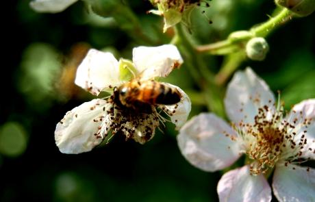 blommor o bi